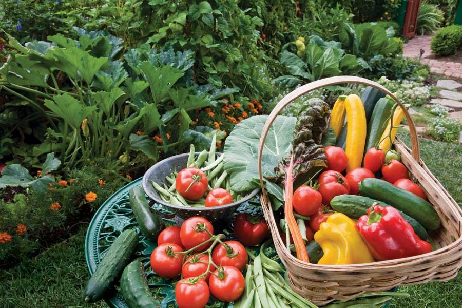 Köögiviljade kasvatamine