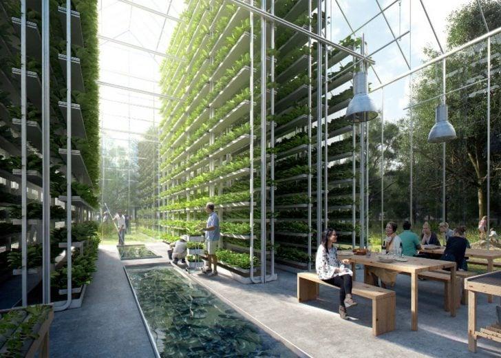 Taimekasvatuse arendusuunad