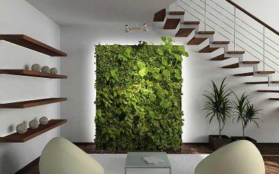 Taimed toaseinale kasvama