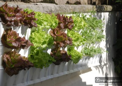 Vertikaalne aiandus (3)