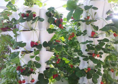 Vertikaalne-aiandus-moodulpeenar_1200x807