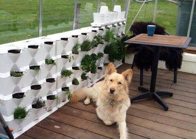 Vertikaalne peenar kasvuhoones