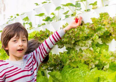 Vertikaalne taimekasvatus aias (2)