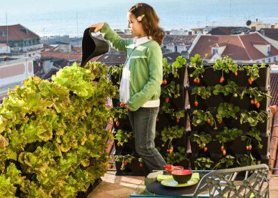 Vertikaalne aiandus