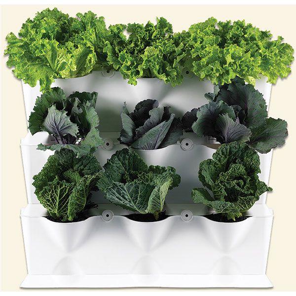 Vertikaalne aiandus_moodulpeenar 9 taimele