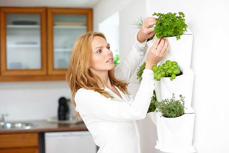 Vertikaalne taimekasvatus