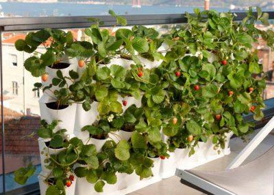 Vertikaalne peenar maasikatega