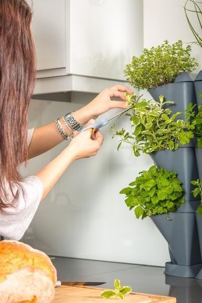Ürdikasvatus köögis