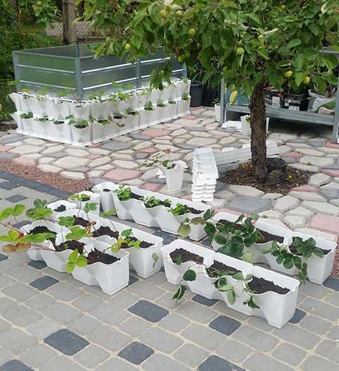 Vertikaalsed taimemoodulid