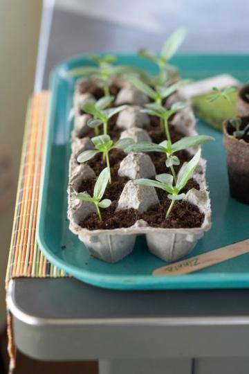 Aeg on seemned mulda pista – miks mitte kasutada selleks munareste.