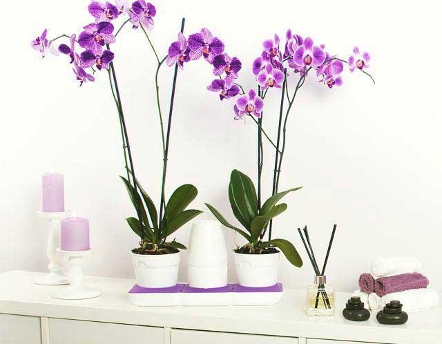 Lillepotid kastmissüsteemiga